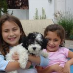 Adwar children and they canyoun Hills Havanese