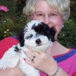 Canyon Hills Havanese Black and White Parti