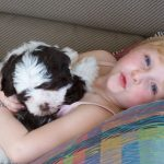 Puppy buyer from Canyon Hills Havanese